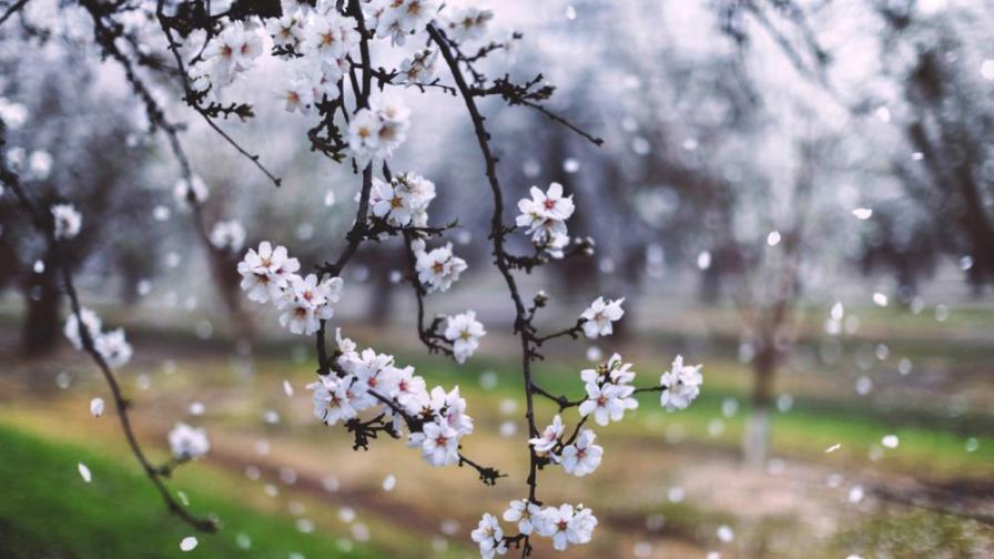 Вятърът утихва, пролетта се завръща