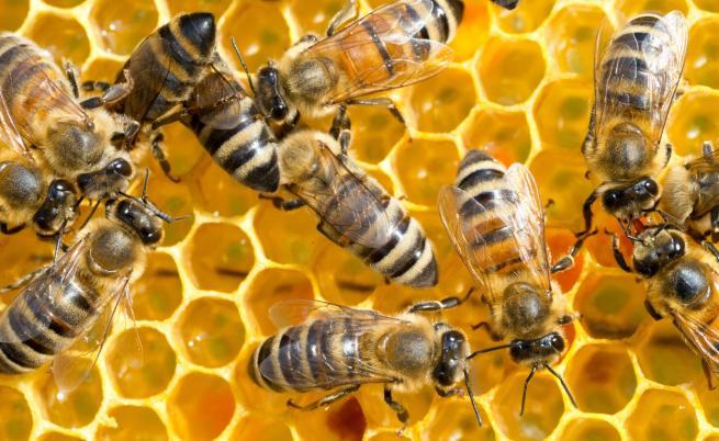 Земеделското министерство ще обезщети стопаните на отровените пчели