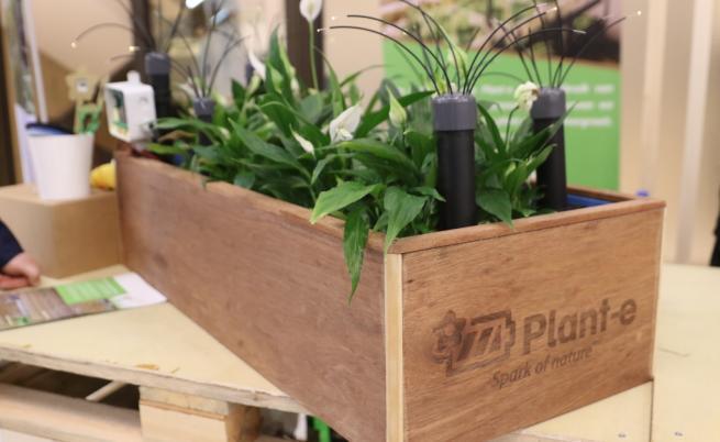 Нидерландски учени произвеждат ток от растения