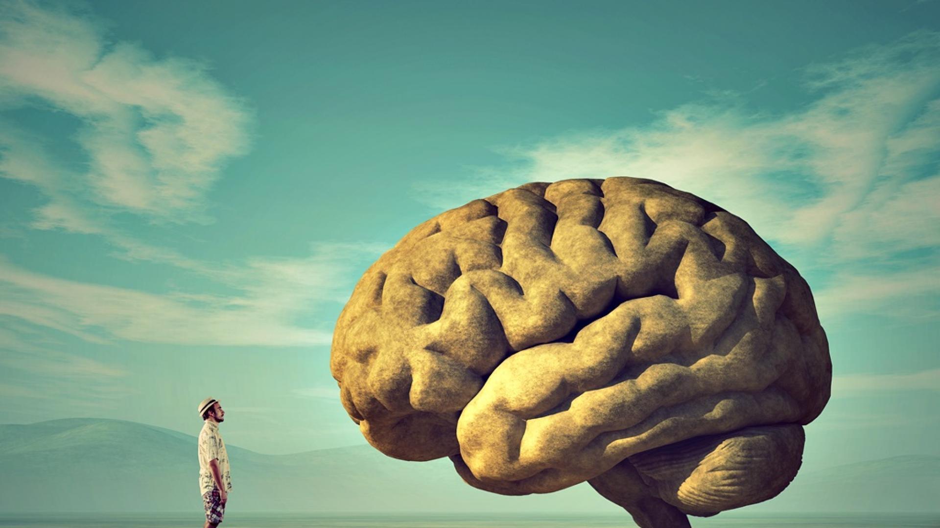 Затлъстяването е свързано със смаляване на мозъка