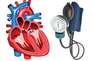 Сърцето на хората с високо кръвно работи на по-бързи обороти, което води до преждевременна умора на сърдечния мускул