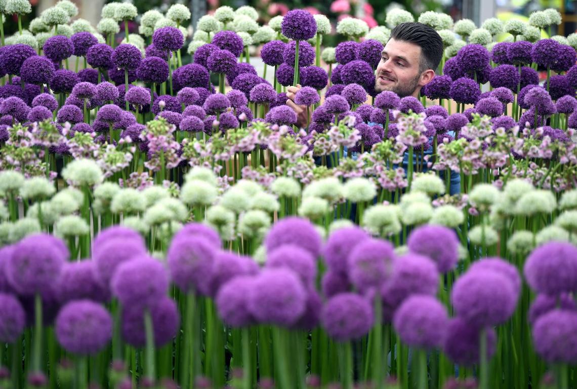 Дворът на Кралската болница в Челси се превръща в приказна цветна градина. От 21 до 25 май там се провежда Фестивал на цветята - най - известното изложение от този род в Обединеното Кралство, което ежегодно се посещава от 157 000 души.
