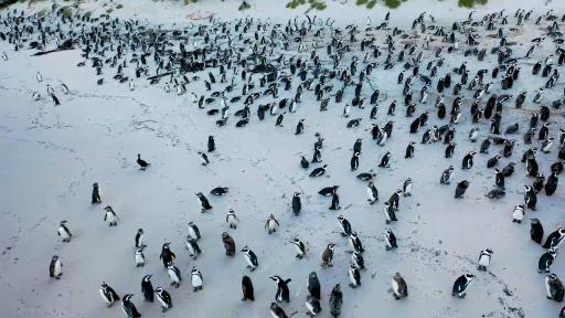 Разходка с пингвини в Южна Африка