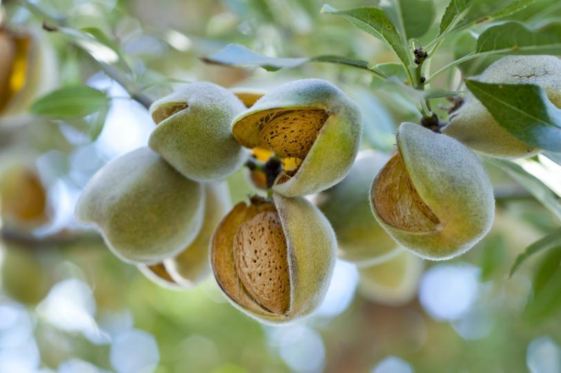 <p><strong>Бадеми</strong></p>  <p>Тайната на успешното отслабване е честото и разделното хранене. Бадеми с пресни плодове са най-добрата междинна закуска, тъй като тези ядки са пълни с фибри.</p>