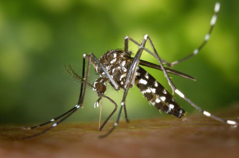 <p><strong>Ухапване от комар</strong> -&nbsp;Визуално ухапванията от комари по кожата изглеждат като розови мехурчета, които имат формата на кръг или&nbsp;капка.&nbsp;Ако потъркате мястото на ухапването, то ще стане червено, защото слюнката на комара ще попадне в околните тъкани, което ще увеличи реакцията.&nbsp;Има случаи, когато на ухапаното място възниква&nbsp;алергична реакция с оток.</p>