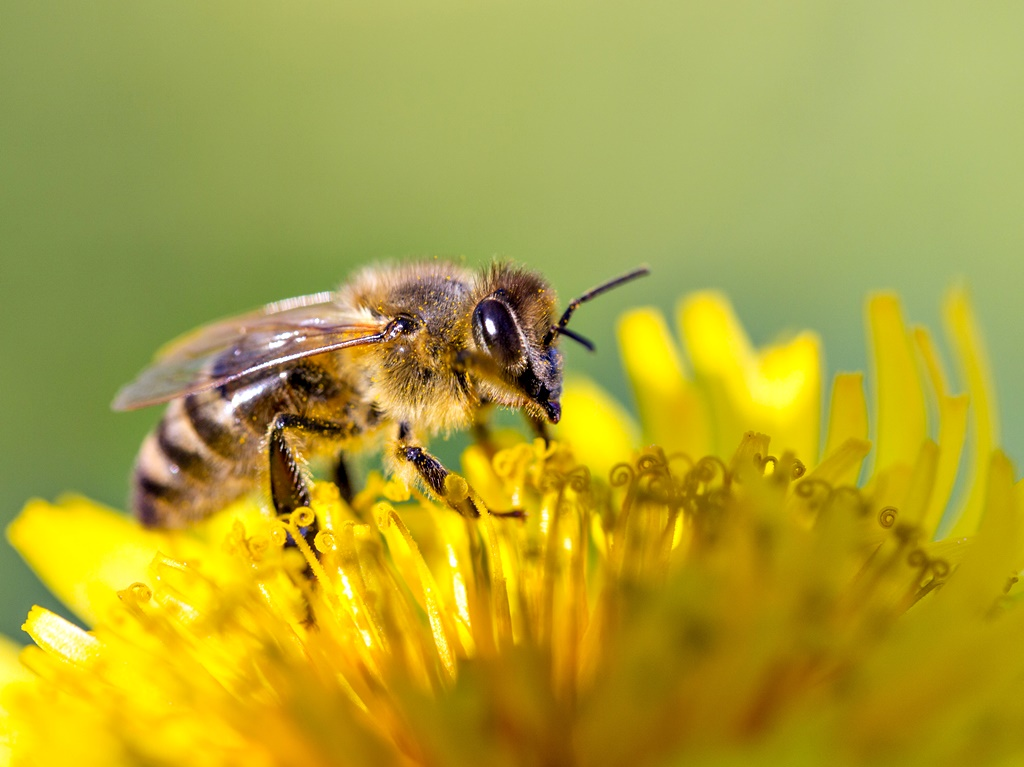 Още от ранна възраст Джъстин Шмидт се интересувал от насекоми. След като става ентомолог и започва да ги изследва, решава да създаде своята скала на болката. Защото токсичността на ужилването и болката от него невинаги са свързани.<br /> Скалата е от 0 до 4, като за онагледяване ученият използва ужилването от пчела, което всички познаваме, и му дава оценка 2.