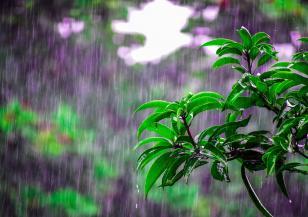 Какво причинява киселинен дъжд