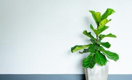 """<p>В Инстаграм &quot;пощуряха&quot; по това <span style=""""color:#ffbc00;"""">растение</span> (СНИМКИ)</p>"""