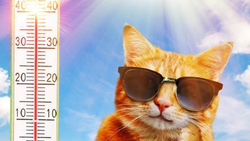 <p>Лятото се завърна, ще бъде ли топло през уикенда</p>