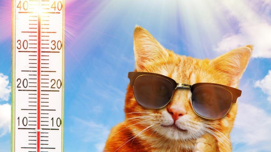 <p>Предупреждения за опасни жеги и в петък</p>