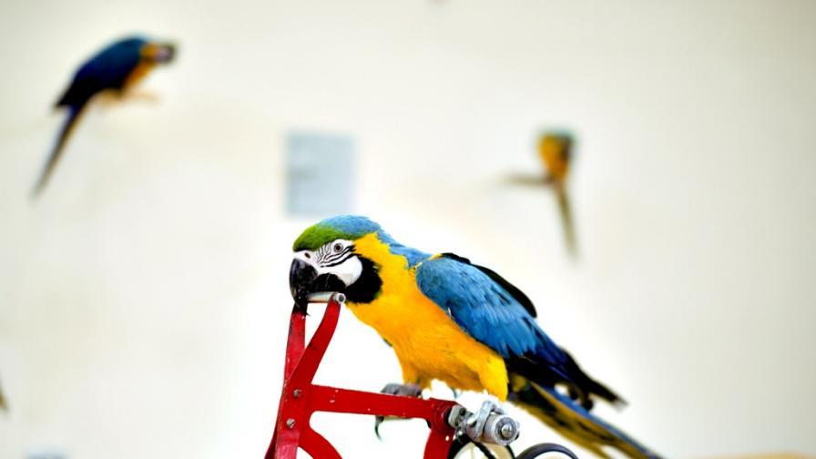 <p>&quot;<strong>Птичите мозъци</strong>&quot; са <strong>по-умни</strong>, отколкото предполагаме&nbsp;</p>