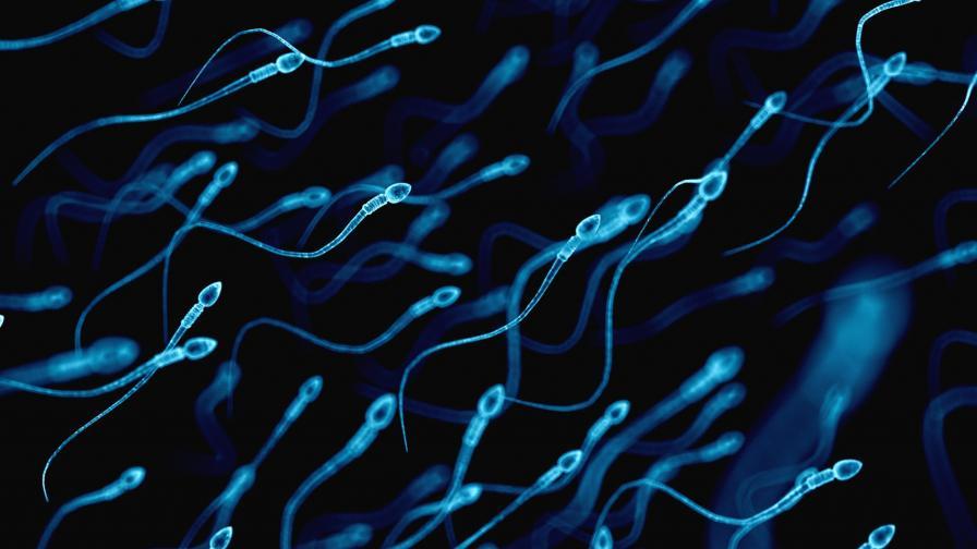 <p>Спермални банки сменят мъжете астронавти</p>