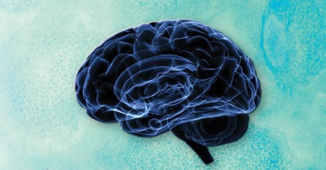 Мозъкът те прави това, което си – той е центърът