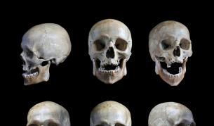"""<p><span style=""""color:#ffbc00;""""><strong>Два черепа</strong></span> могат да променят изцяло теорията за еволюцията</p>"""
