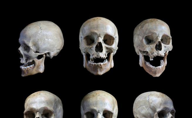 Два черепа могат да променят изцяло теорията за еволюцията