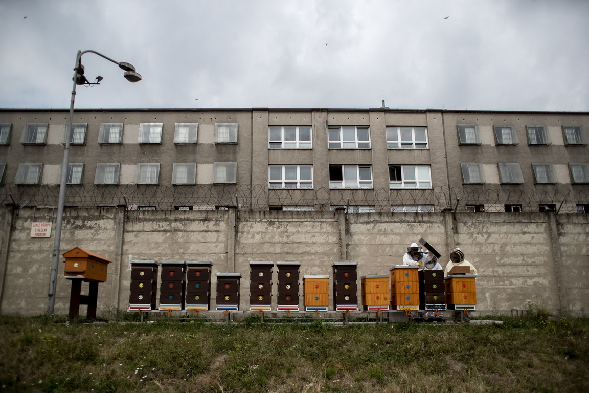 Днес в програмата работят шестима затворници, двама от които са от самото начало.  Пчеларството не намалява присъдите на затворниците, но може да повлияе на тяхната оценка.