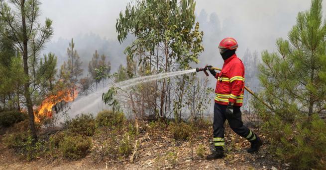 Свят Хиляда пожарникари се борят с пожари в Португалия Това