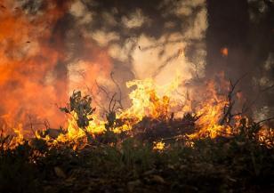 Отново пламна пожар край Хасково