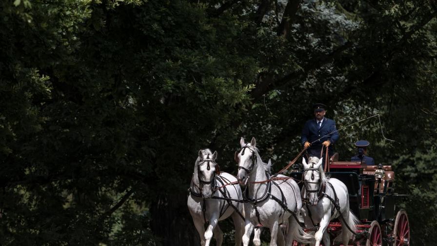 Националната ферма за коне