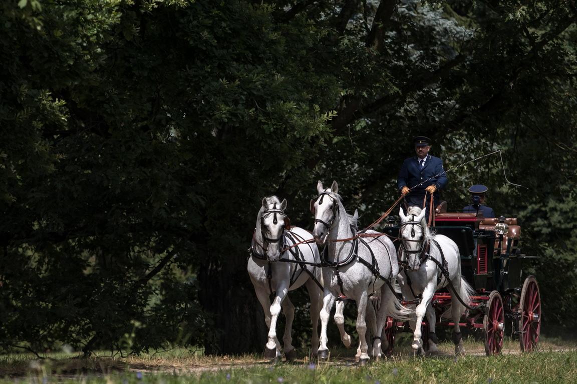 <p>Национална ферма за коне в Кладруби над Лабем, Чешка република</p>