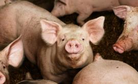 <p>Бунт за прасетата: Ще вдигнем цяла Южна България</p>