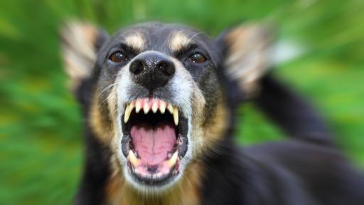 <p>Бездомно куче нахапа 6-годишно дете</p>