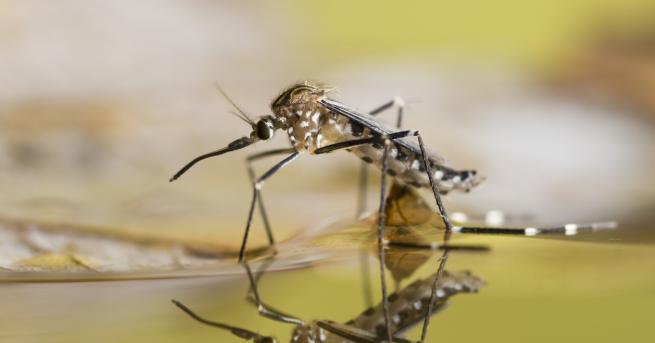 Любопитно Как комарите промениха историята на човечеството Насекомите, причинители на