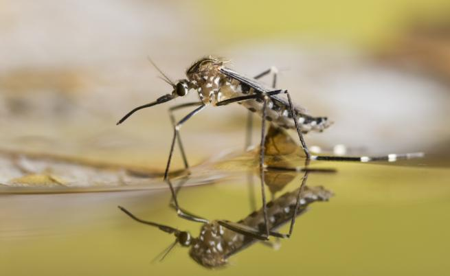 Как комарите промениха историята на човечеството