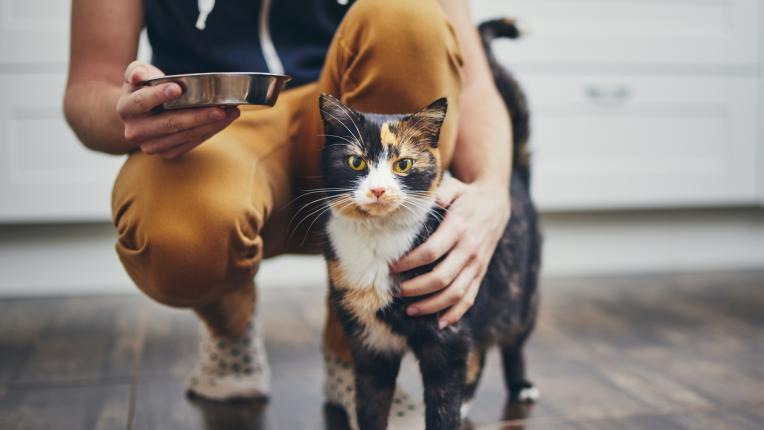 10 човешки храни и напитки, опасни за здравето на котките