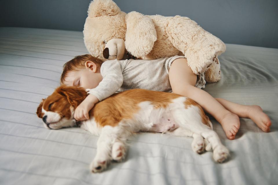 бебе куче