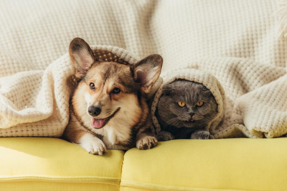куче котка