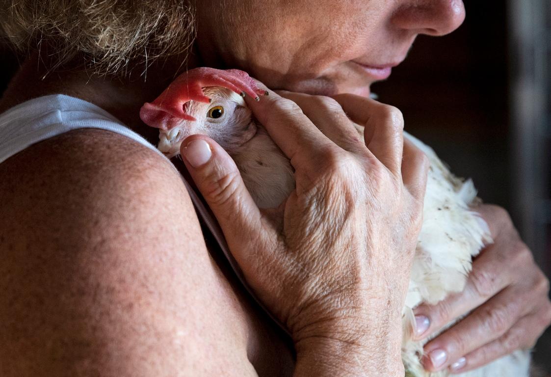 <p>Центърът за посетители също така позволява личен контакт с животните, за да се повиши осведомеността за техните физически и емоционални страдания и достойнството на съществата.</p>