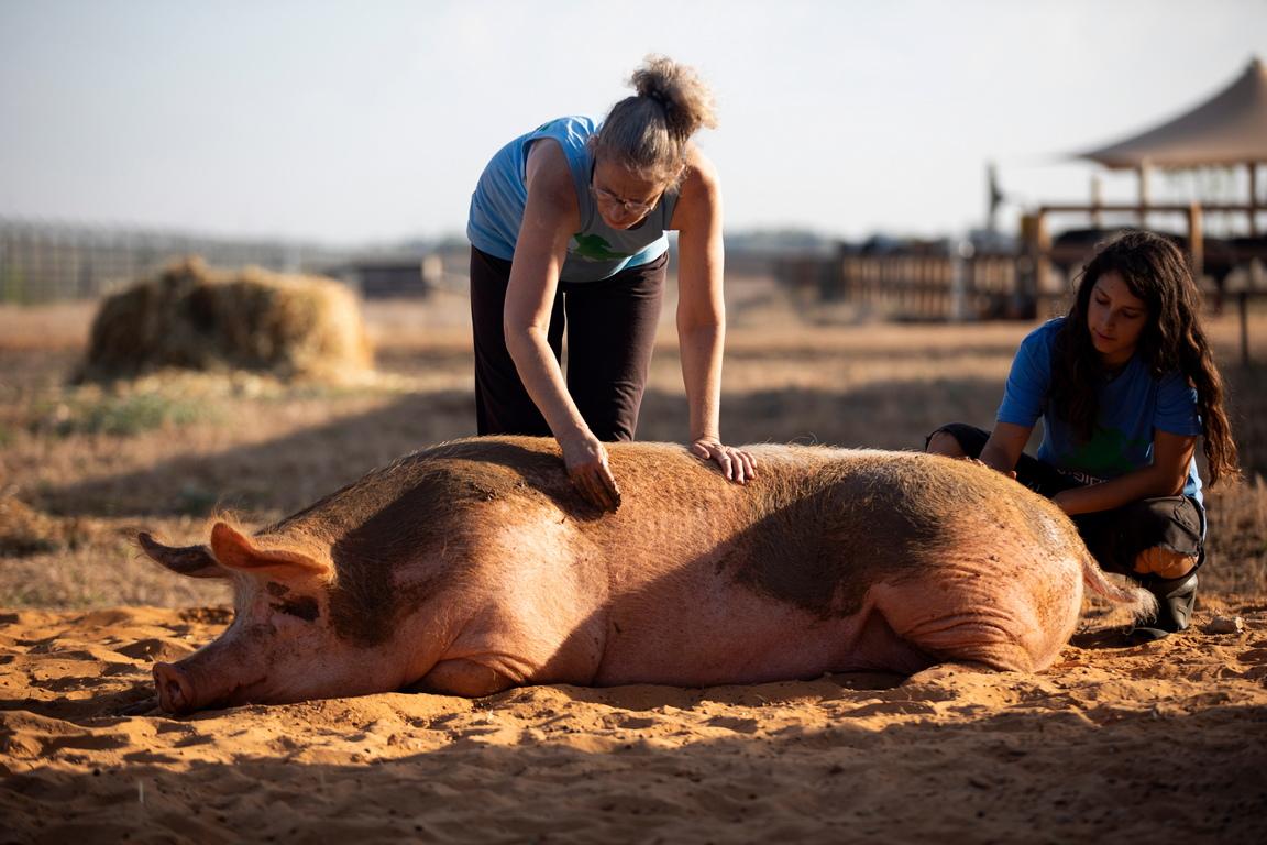<p>Фермата е убежище за животни, изхвърлени от хранително-вкусовата промишленост в Израел, както и за малтретирани или изоставени животни.</p>