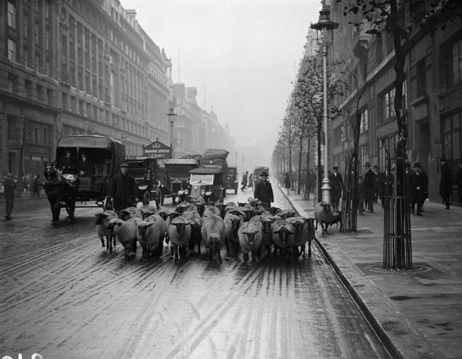 овце в Лондон