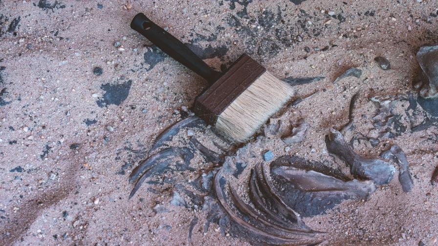 Археолози откриха напълно запазен скелет на мамут