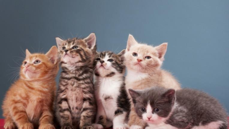 котка домашен любимец затлъстяване проблем свободно време