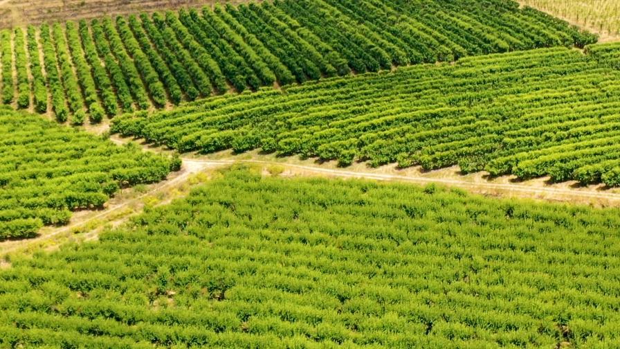 Виното на Южна Африка