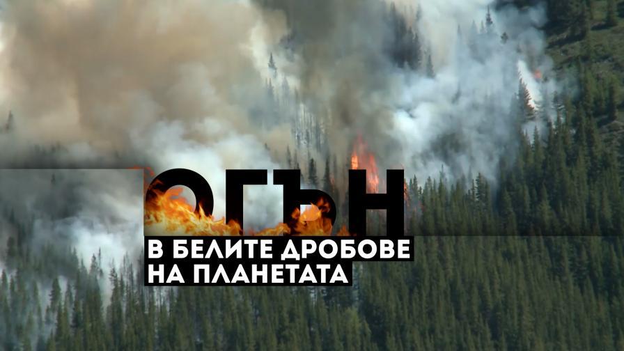 Огън в белите дробове на планетата, какви са последиците