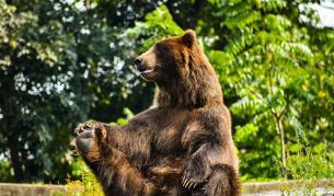 <p><strong>Най-смешните снимки</strong> на диви животни&nbsp;&nbsp;</p>