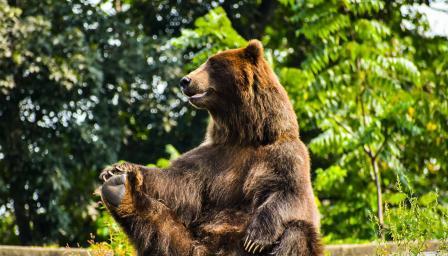 <p><strong>Най-смешните снимки</strong> на диви животни</p>