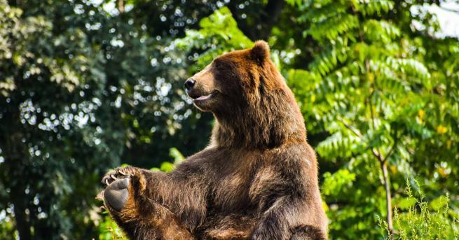 Любопитно Най-смешните снимки на диви животни, заснети тази година Уплашена