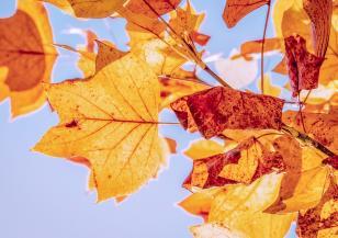 Астрономическата есен ни приветства със слънце