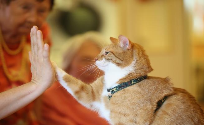 Котките ви обичат, вижте защо