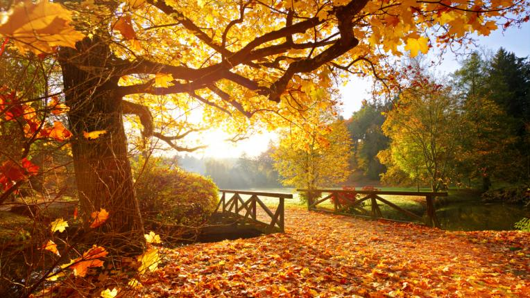 Дневен хороскоп за неделя, 3 октомври