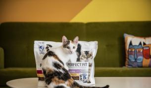 Как да изберем перфектната котешка храна?
