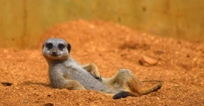 Любопитно Вижте най-щурите снимки на диви животни за 2019 г.