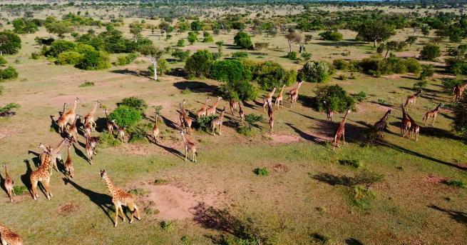 """Любопитно Къде да направим най-доброто африканско сафари """"Без багаж"""" ни"""
