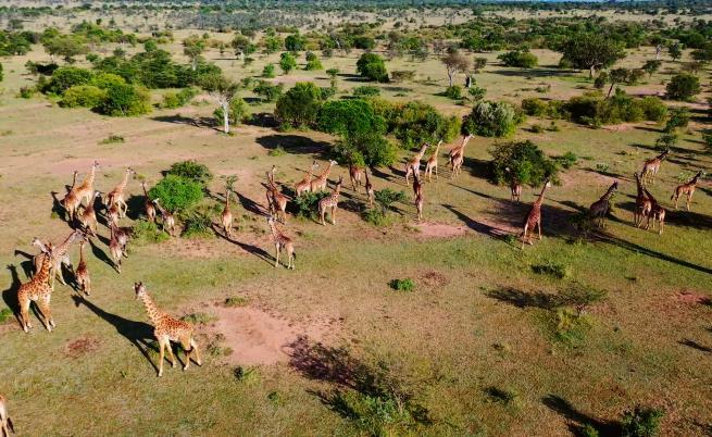Къде да направим най-доброто африканско сафари