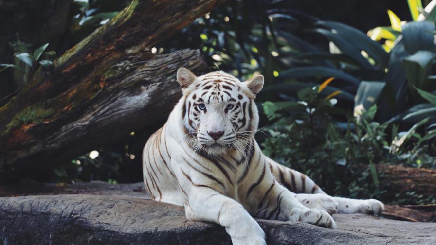 10-те най-очарователни животни на планетата