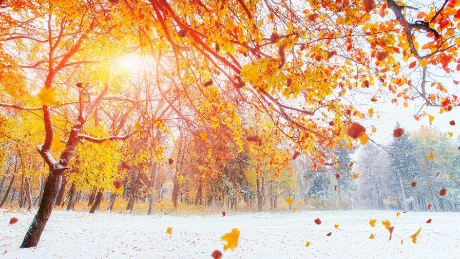 Рязко застудяване в сряда, а после дъжд и мокър сняг